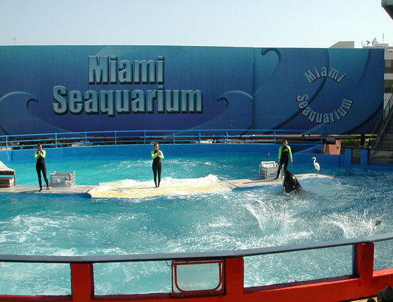 miami_seaquarium_medium