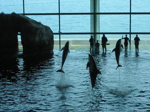 The Shedd Aquarium In Chicago Citybuzz A Vidicom And