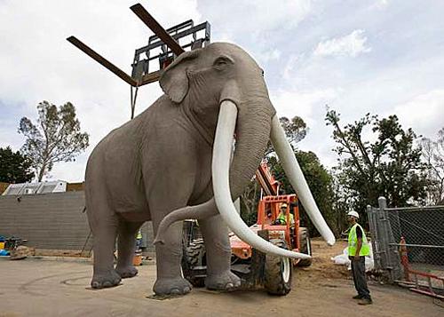 san-diego-zoo-elephant-odyssey_46404118