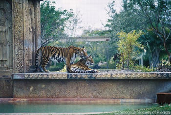 Zoo Miami is a jungle of an attraction ripe for wild exploration ...