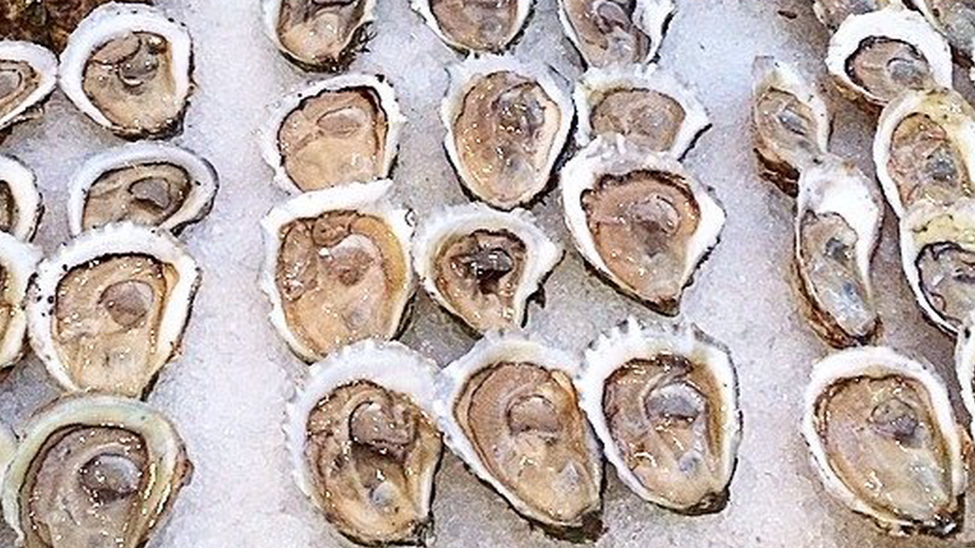 oysters_sept22